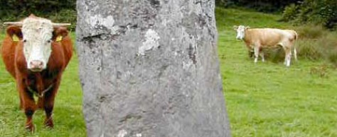 Dunmanway Hill Walking Trails