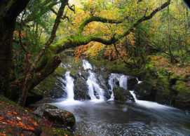 Glengarriff_nature reserve